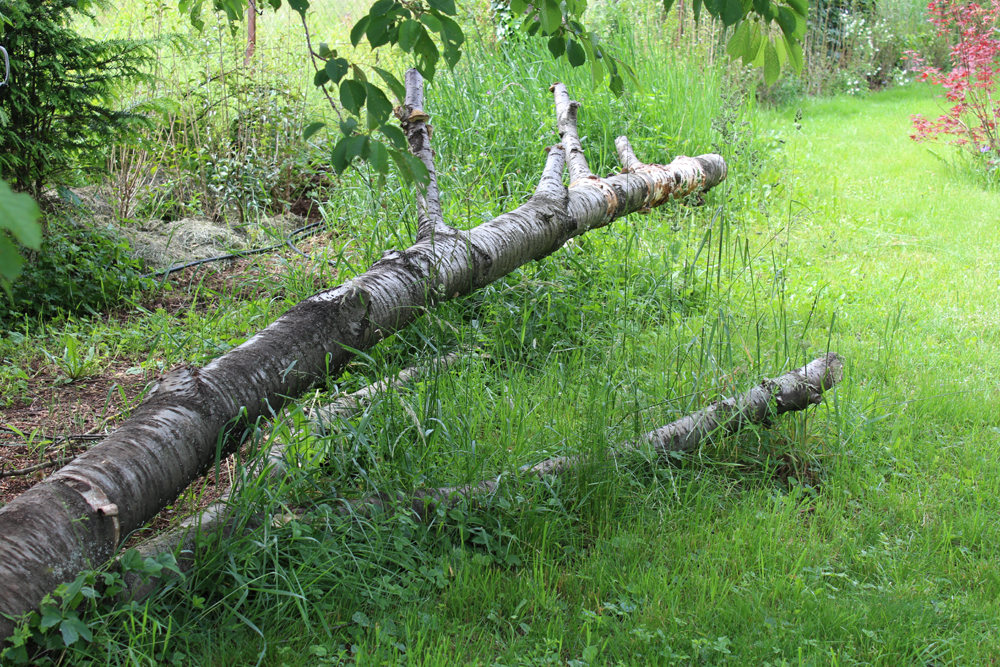 Insektenfreundlicher Garten, Totholz