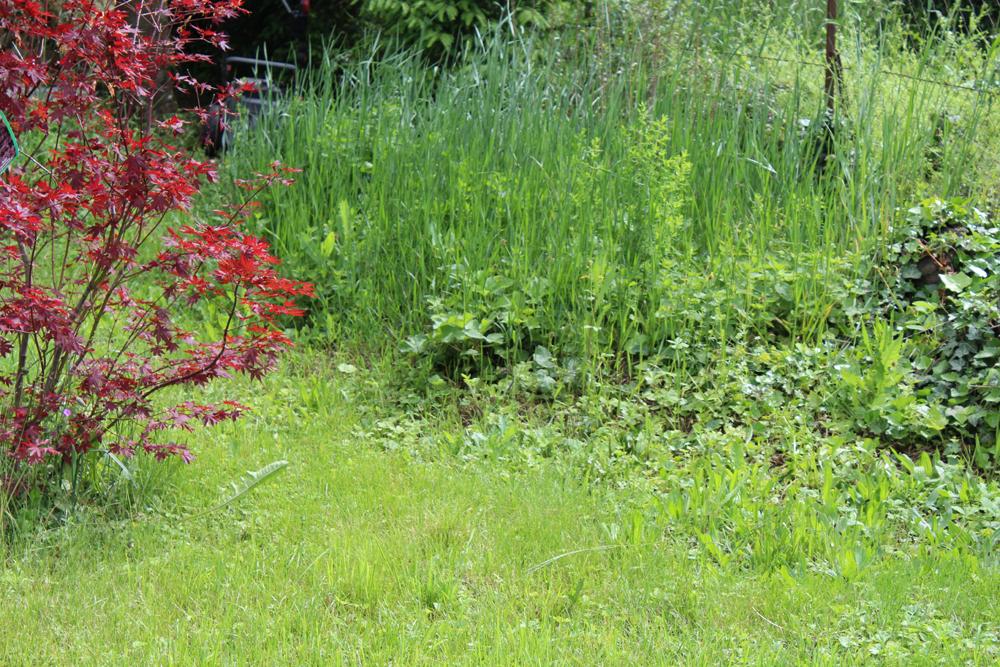 Insektenfreundlicher Garten, Wildes Eck