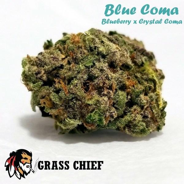 Blue Coma Grass Chief 2