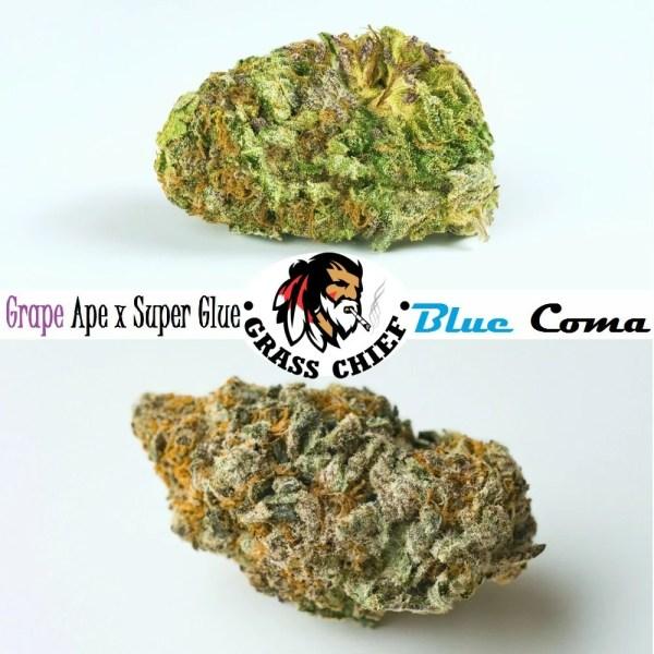 Blue-Coma-Grape-Ape-x-Super-Glue-Combo-Grass-Chief