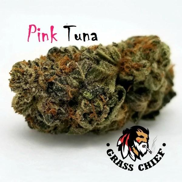 Pink-tuna-grass-chief