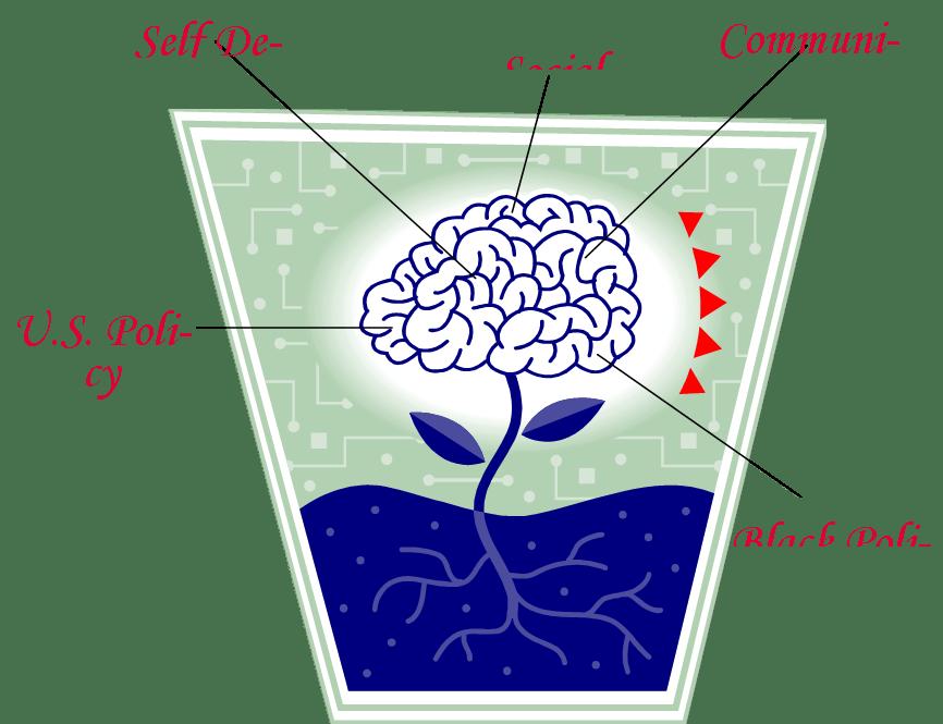 brain root3