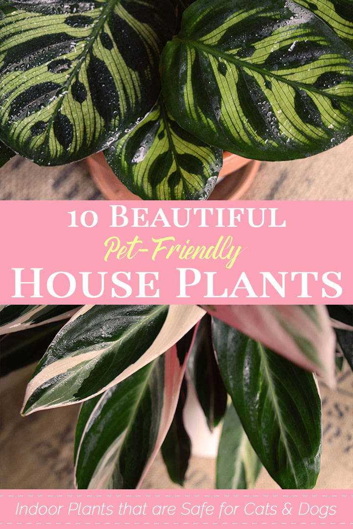 10 Beautiful Pet-Friendly House Plants for Your Home.