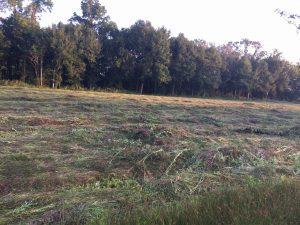 Empty Field of Flowers