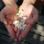 hands flowers gift daisies giving