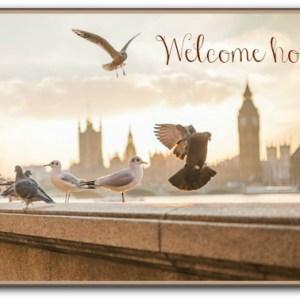 seagulls landing on a bridge