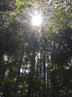 sunthroughtrees