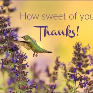 hummingbird drinks from purple flower