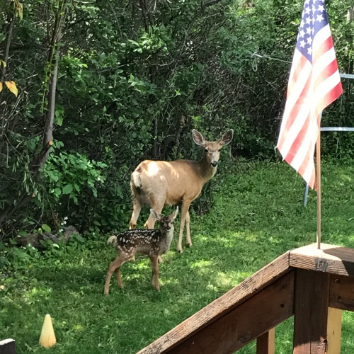 Deer and fawn
