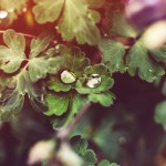 Summer Blessings: Tears