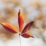 In Thanksgiving for Life: Respond Creatively