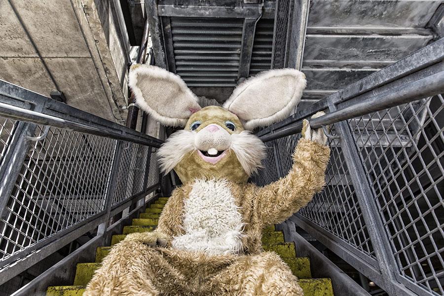 Urban Bunny Free Photo