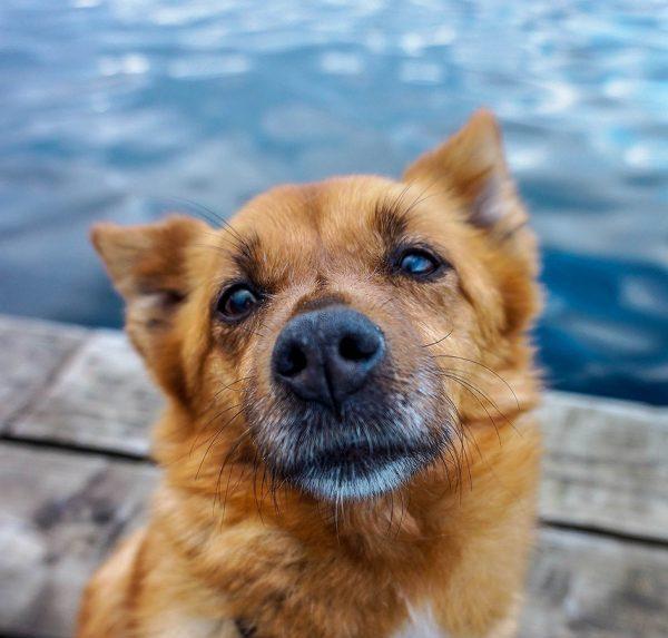 Dog at lake, pursue happiness