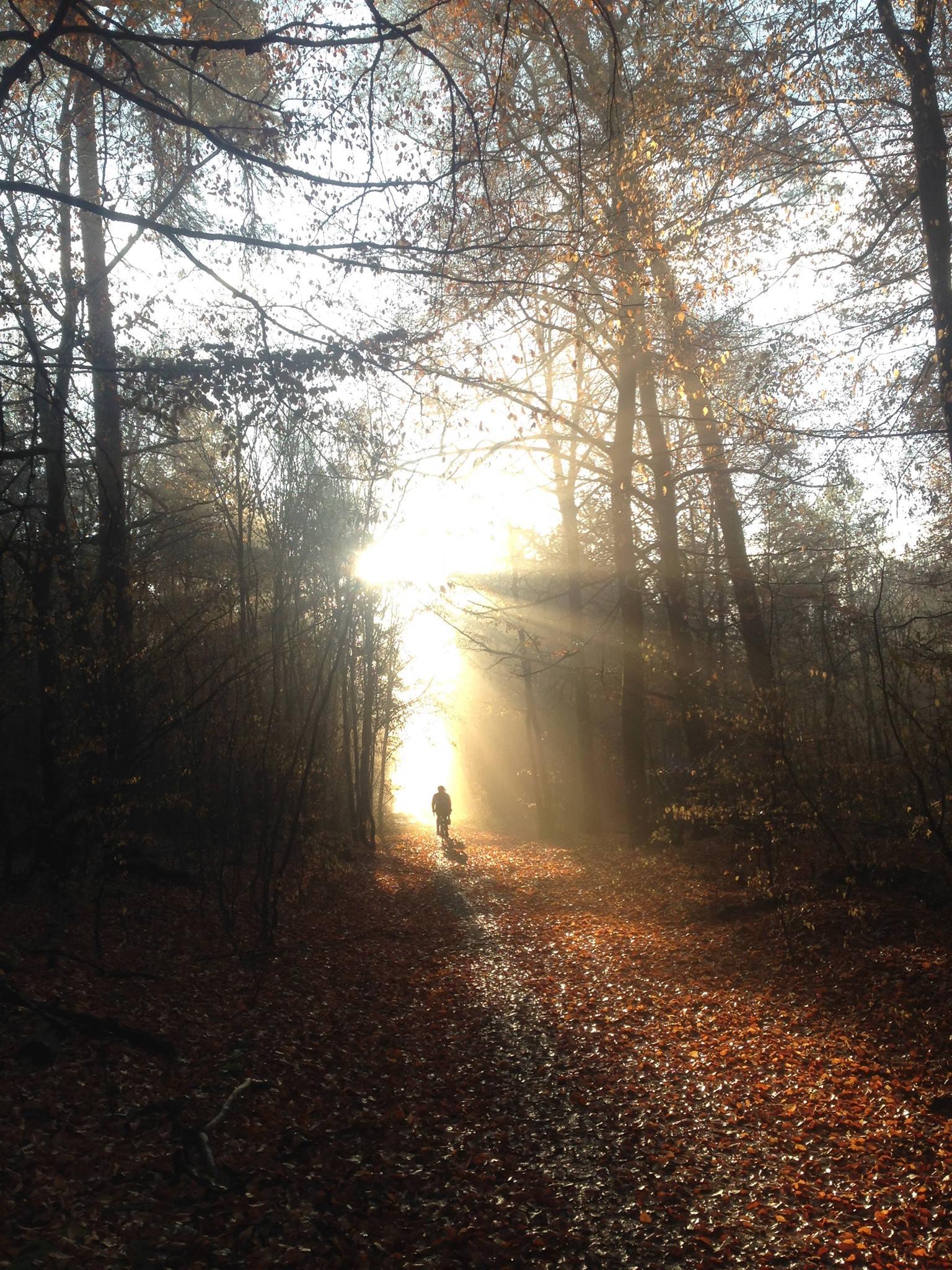 Wald Weg und Sonne