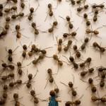 Ant Art Installations by Rafael Gómezbarros