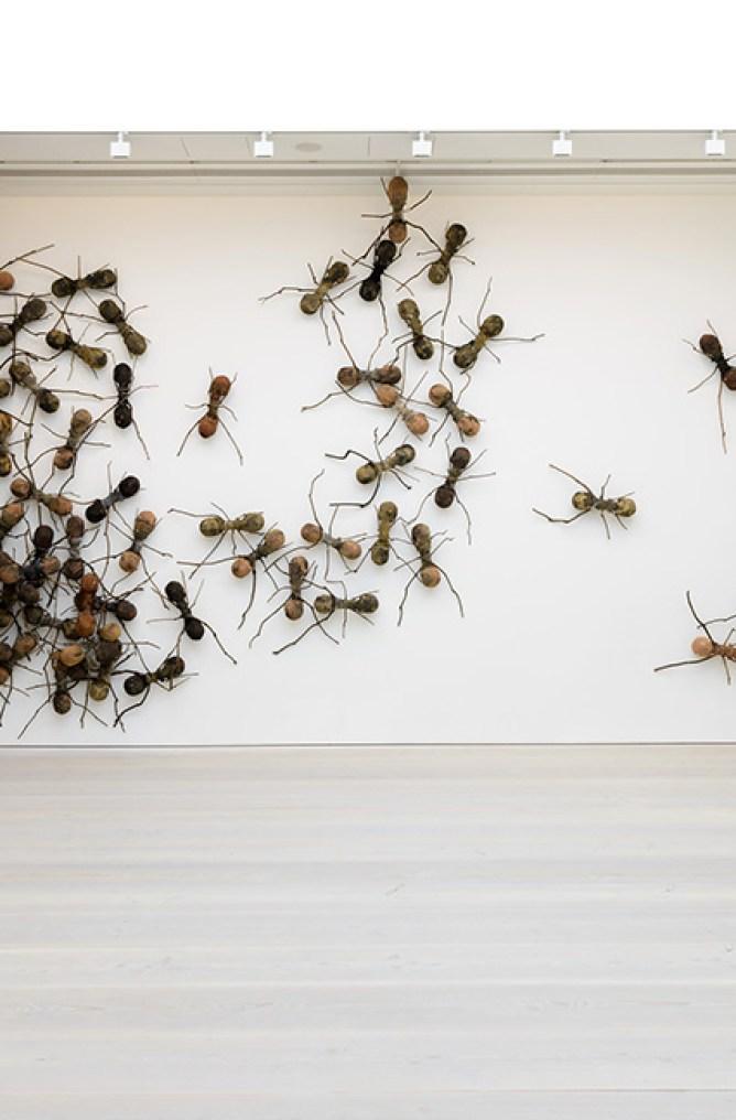 ants (2)