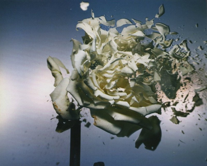 Paradise Lost photographed by Nick Knight