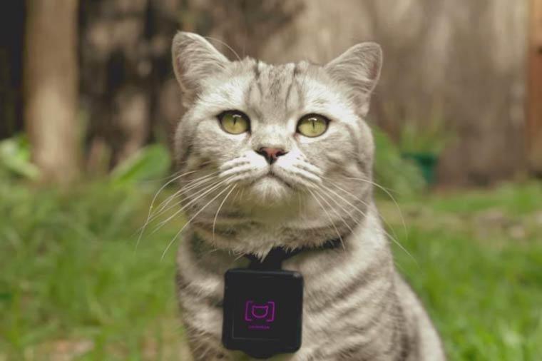 Catstacam2