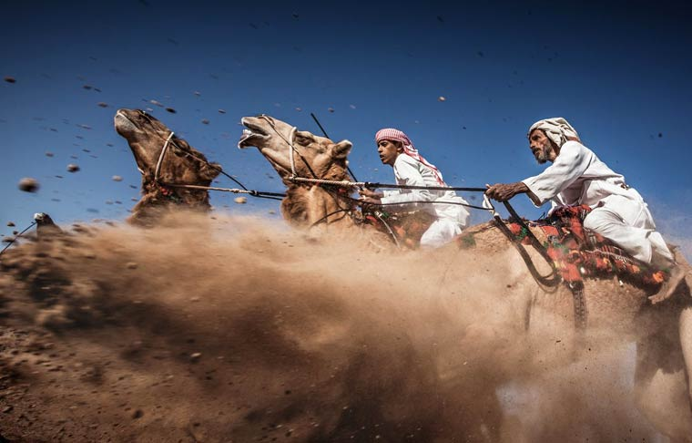 Camel Ardah – Photo by Ahmed Al Toqi