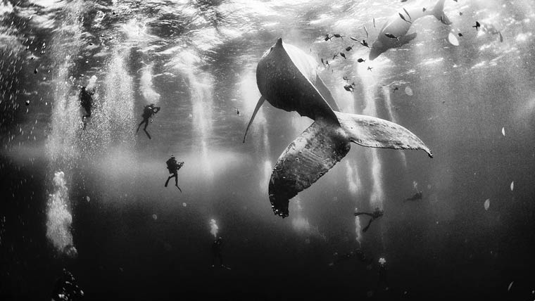 Whale Whisperers – Photo by Anuar Patjane