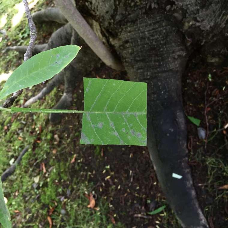 Bit Leaves by Baku Maeda (3)