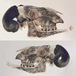 Illustrations on Skulls by DZO Olivier