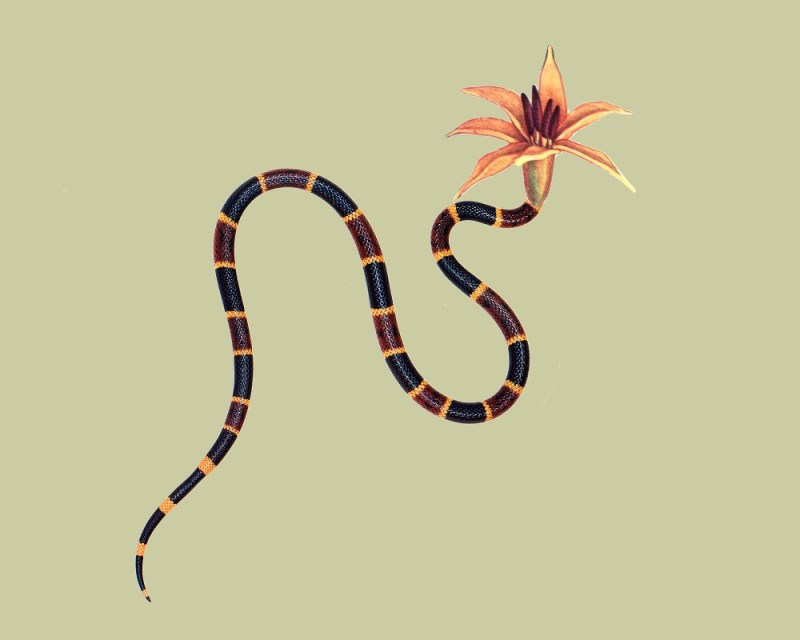 snake-flowers-by-annalynn-hammond-5