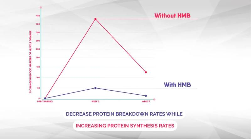 results-from-study-about-hmb-supplements-and-protein-breakdown