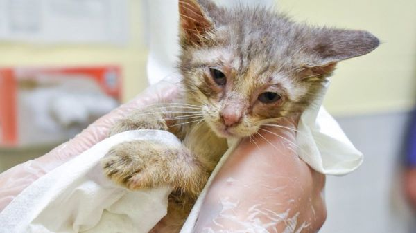 58 cats rescued from Iowa home