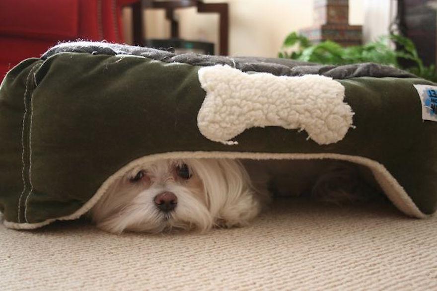 hiding-ninja-funny-dogs-271__605.jpg