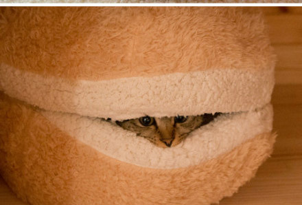 hidingcat