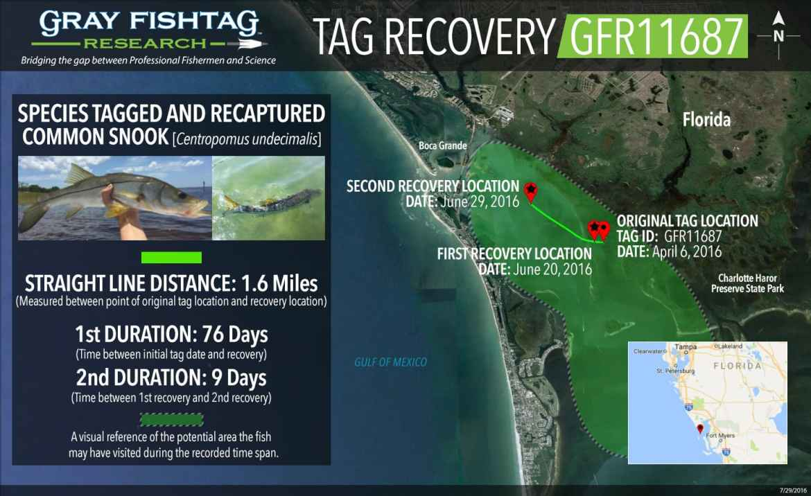 GFR11687-Snook-Double-Recovery