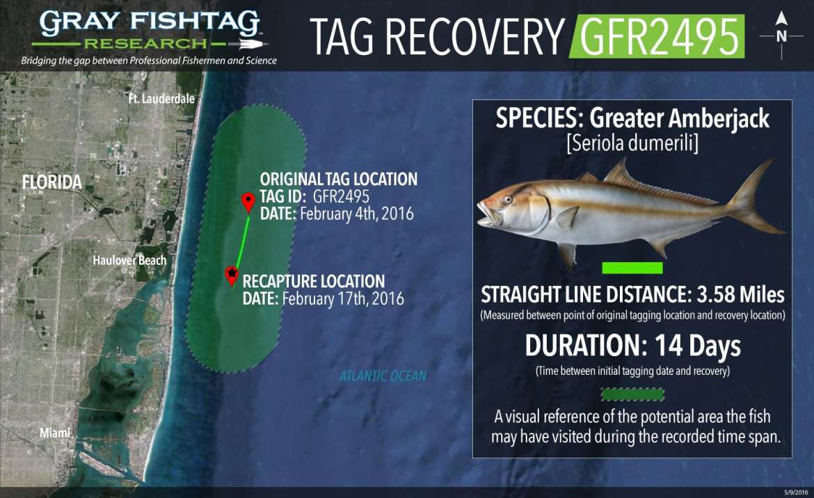 GFR2495-Greater-Amberjack-Recovery