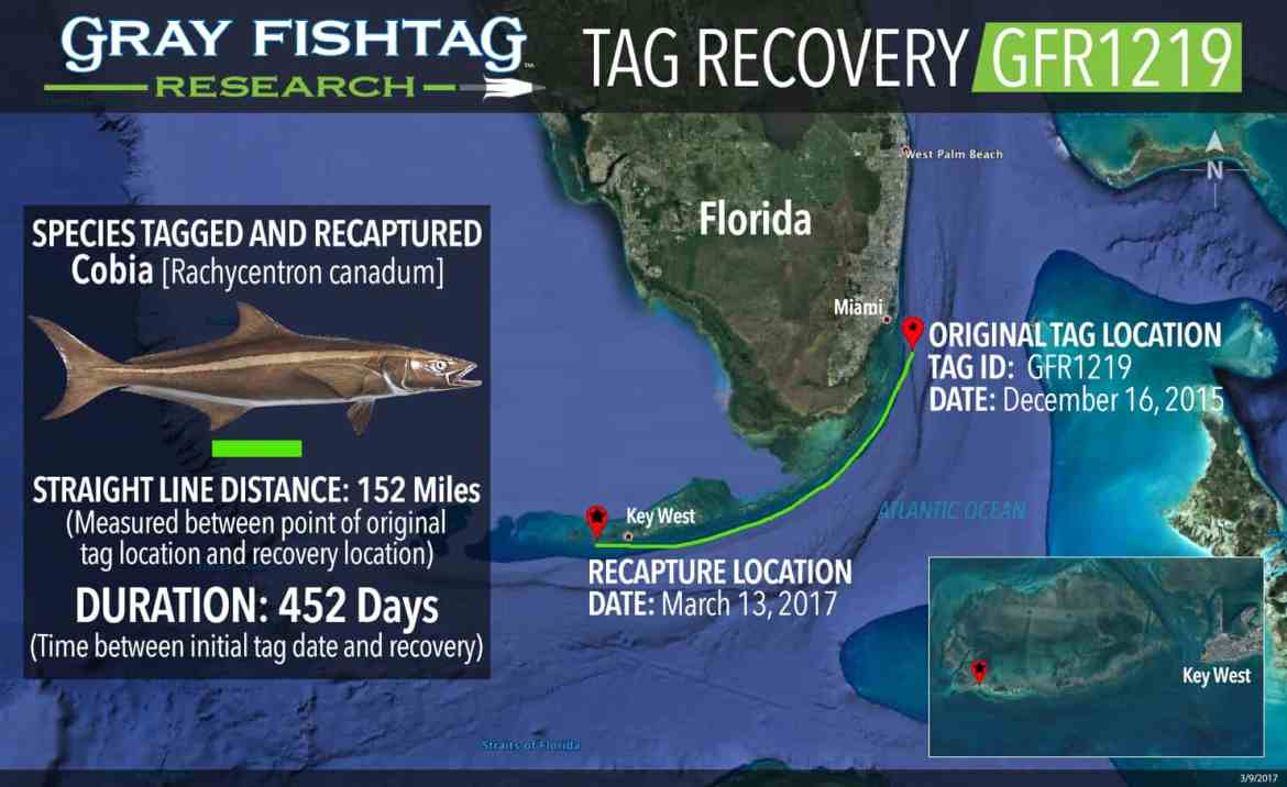 GFR1219-Cobia-Recovery.