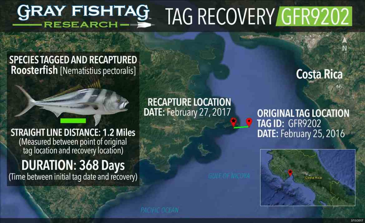 GFR9202-Roosterfish-Recovery