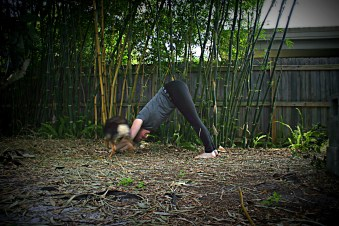 downward dog with Anna June 2015