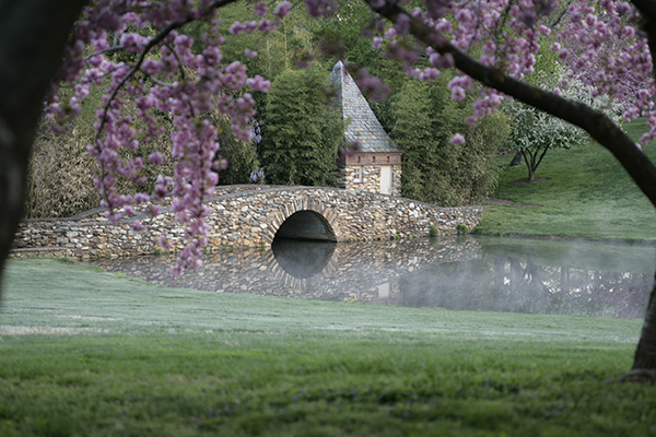 Stone bridge overlooking a pond surrounded by freshly cut grass with a cherry tree limb in the forefront