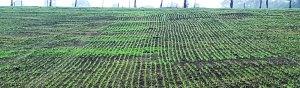Pasture Seeding NE victoria