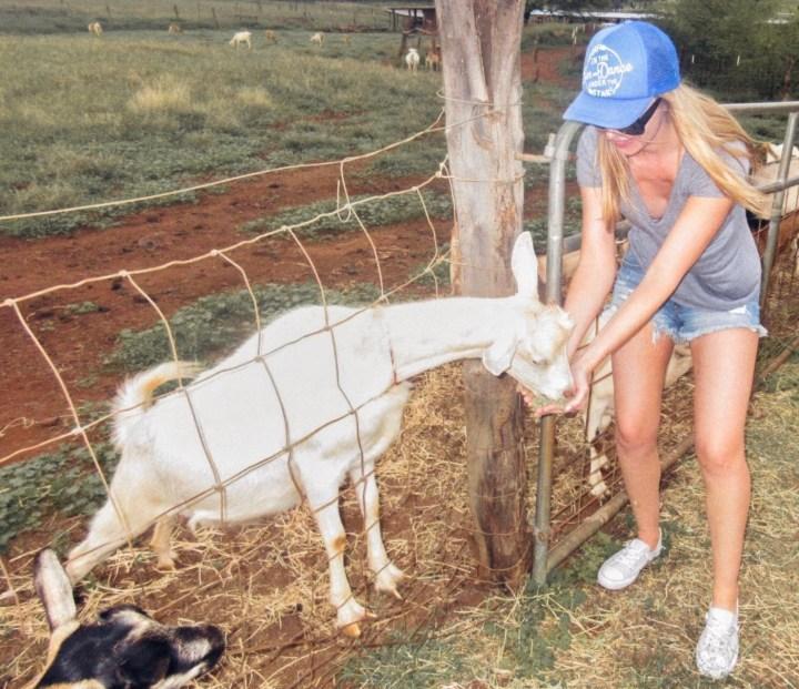 Surfing Goat Dairy Farm in Maui Hawaii