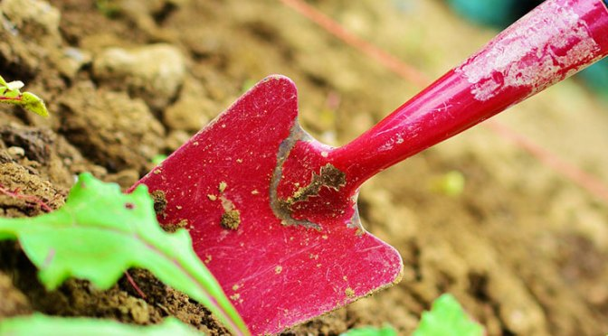 Preparing Your Fall Garden Beds