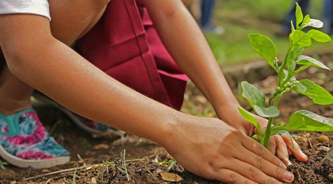 Three Myths About Organic Gardening
