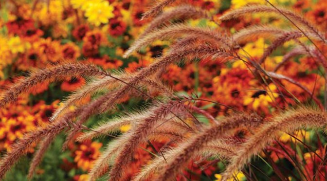 Planting Ornamental Grasses