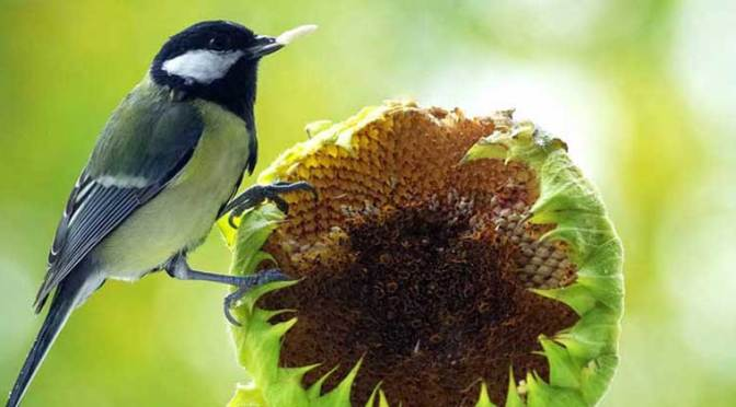 "Most Birds Say ""We Love Sunflower Seeds"""