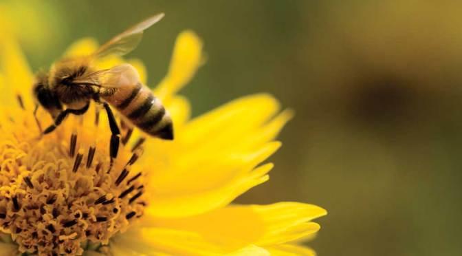 Plant a Bee-autiful Garden!