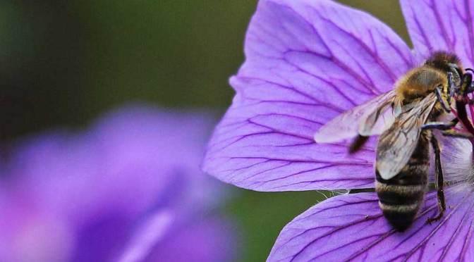 Let's Design a Pollinator Garden