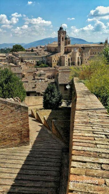 Urbino Gat