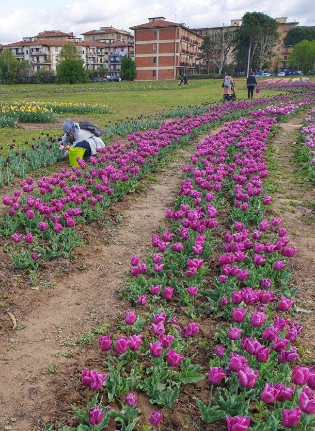colher-flores