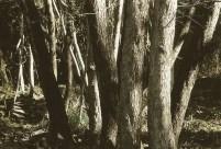 Graziella Reggio, bosco 2, cm 100x150