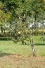 Landhausidylle am Po-Delta