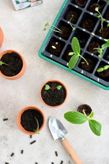 Anbaukalender April, Hochbeetbau & das erste Umtopfen